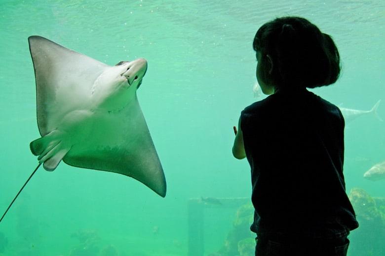oceanapolis aquarium